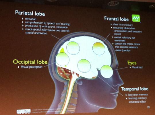 Notre cerveau est guidé d'abord par notre cerveau mammalient et ensuite par notre cortex